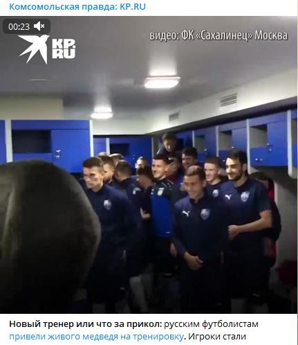 Московских футболистов напугал зашедший в раздевалку медведь