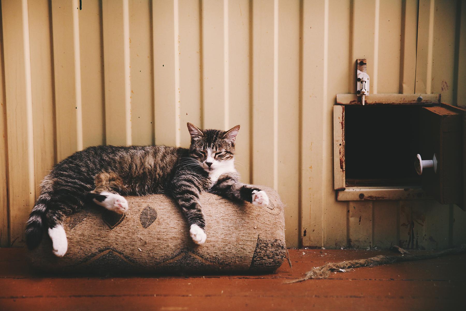 картинка завести кота помощью
