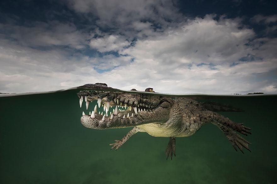 Фото Между двух миров: на этих полуподводных фото видно, что ждет вас за ширмой водной глади