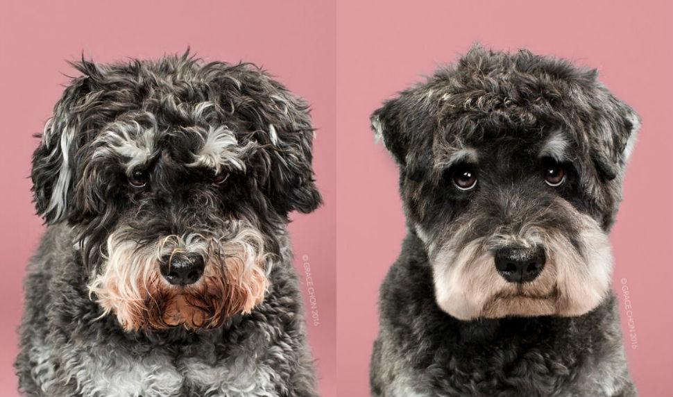 Фото Этих модных собак после стрижки просто не узнать!
