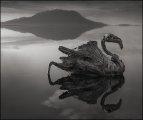 Фотография: Смертельная красота озера Натрон: зловещее место, где животные превращаются в истуканы, а фламинго благоприятно размножаются