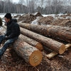Лесная промышленность Красноярского края вышла на безубыточный уровень