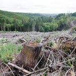 Trilobites: How Far to the Next Forest? A New Way to Measure Deforestation