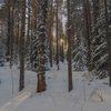В Красноярском крае спасатели помогли выбраться из леса матери и сыну