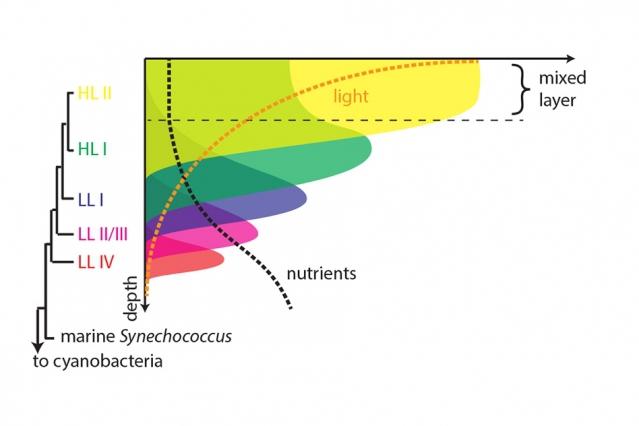 Фото Морские бактерии— зеркало мировой эволюции
