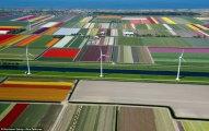 Вокруг света: Поля тюльпанов: весенние аэрофотографии из Нидерландов