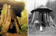 История и археология: Дом-пенек: странные дома, в которых жили американские поселенцы XIX века
