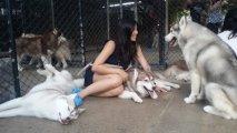 Фото Вокруг света: Кафе, где живут 25 хаски: лучшее место на земле для любителей собак