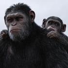 «Выстрел в пустоту», «Планета обезьян: Война», «Блокбастер», «Дикая история»