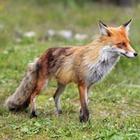 Какие дикие животные обитают в Москве?