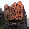 В Абане мужчина незаконно вырубил более 30 сосен на 230 тыс. рублей