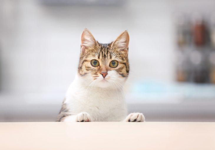 Фото Уменя самый благодарный кот насвете!