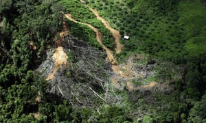 Alarm as study reveals world's tropical forests are huge carbon emission source