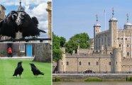 История и археология: Хранители Британской короны: Почему почти 500 лет в Тауэре лелеют «шестёрку» чёрных воронов