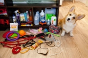 Промышленный дизайн: 7 важных вещей, без которых не стоит заводить в доме животное