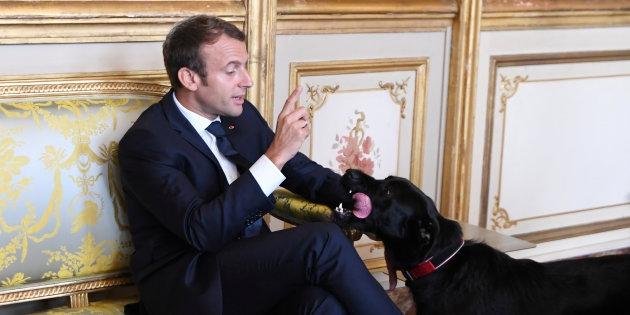 Photo of O dia em que o cachorro de Macron fez xixi tranquilão no meio de uma reunião oficial