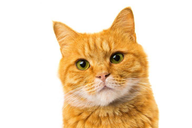 Фото В настоящее время я стараюсь строго соблюдать пост. Моя семья, состоящая из любимого мужа и кота, меня, конечно, поддерживает, но и не упускает возможности пошутить на мой счёт. Так, например, муж