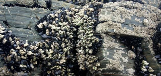 Фото Рыбный рынок в Понтеведре – это настоящий матриархат. Проходя между рядами, где выложены самые диковинные рыбы, моллюски и ракообразные – большее разнообразие я видела, пожалуй, только однажды, на