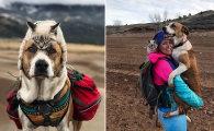 Вокруг света: Очаровательные фотографии собаки и кота, которые ходят в походы со своими хозяевами