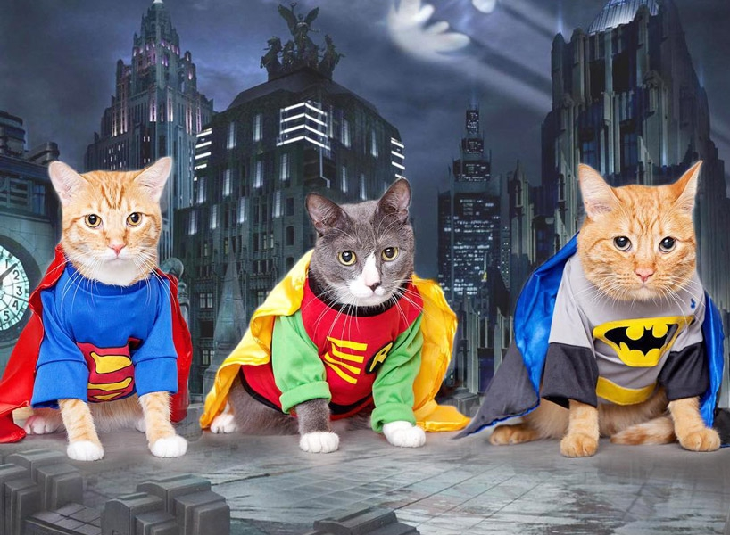 Photo of hero pussies and hot dog pugs, get excited – it's dress up your pet day!