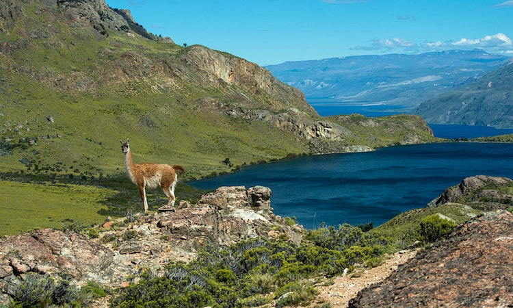 Photo of Chile Transforms 10 Million Acres of Land Into Protected National Parks