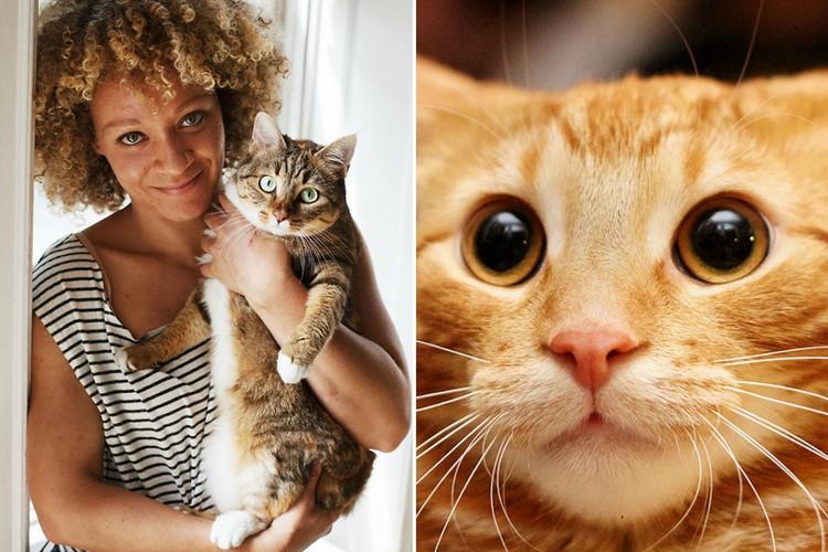 Доказано наукой: веские причины завести кота