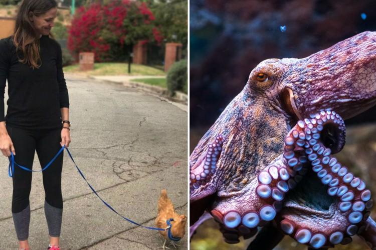 Фото От коз до голубей: необычные домашние питомцы знаменитостей
