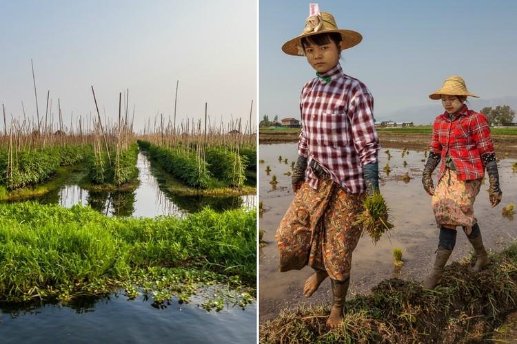 Фото Особый промысел: как в Мьянме выращивают урожай на воде