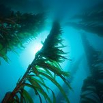 Kelp Farms and Mammoth Windmills Are Just Two of the Government's Long-Shot Energy Bets