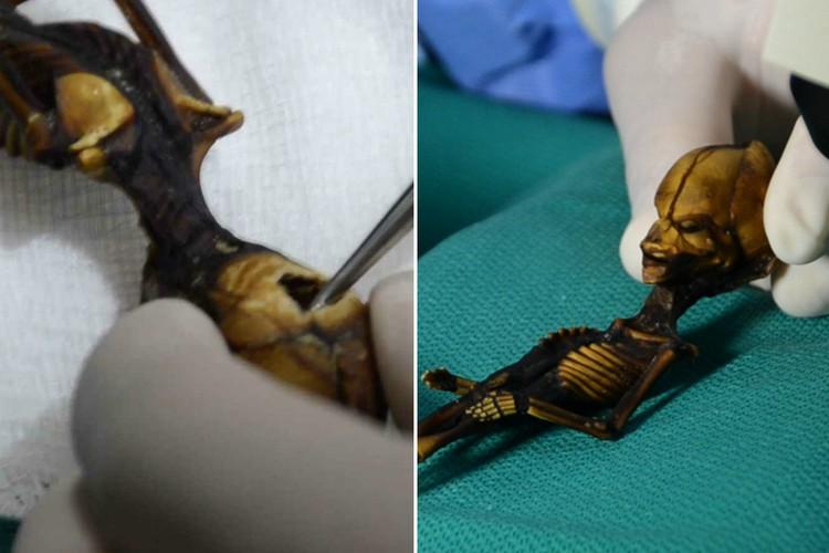 """Фото Анализ ДНК раскрыл трагическую тайну маленького """"пришельца"""" из Чили"""