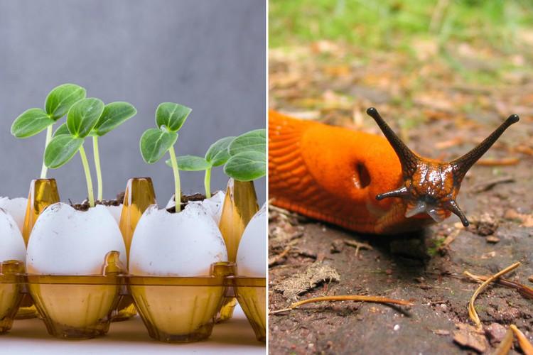 Фото Важный ресурс: неожиданные способы использования яичной скорлупы