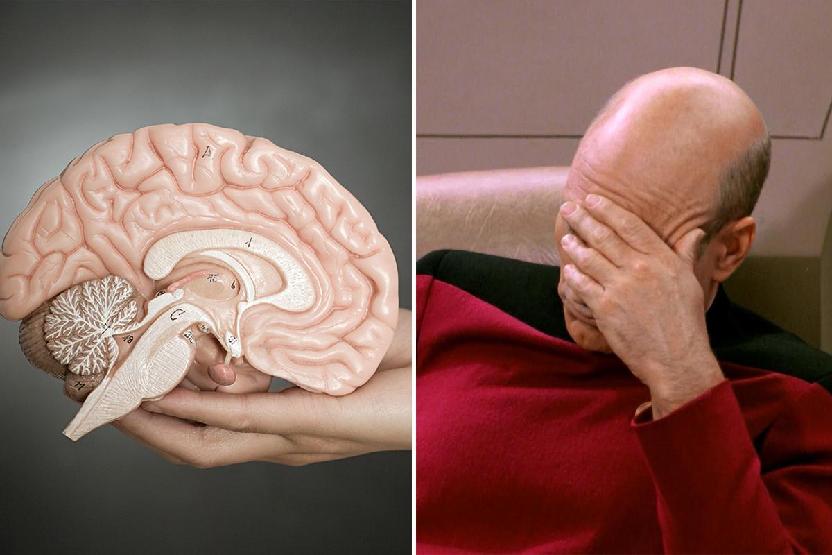 Главный орган: интересные и неожиданные факты о мозге
