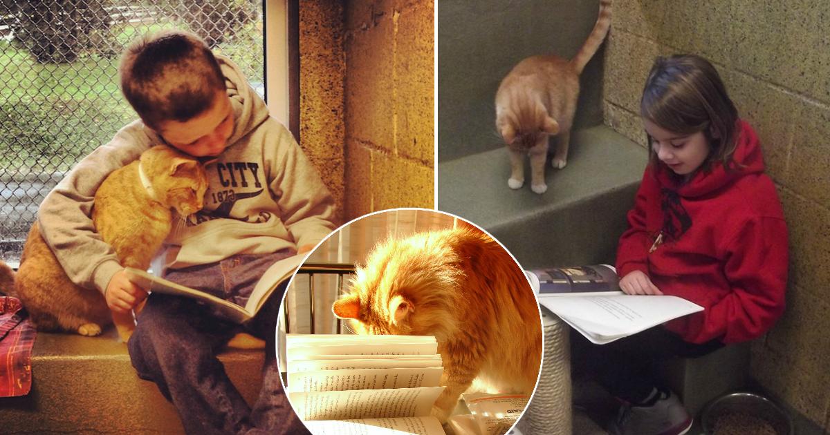 Фото Парное образование, или зачем в США школьники читают книги котам