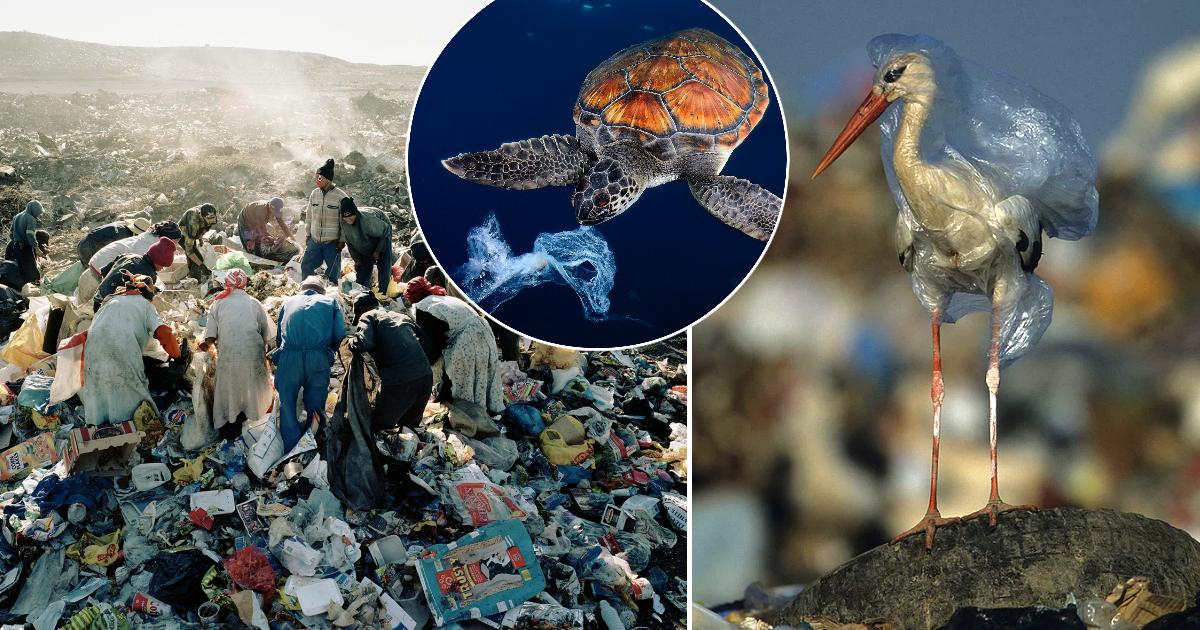 Не ведаем, что творим: жуткие последствия загрязнения Земли пластиком