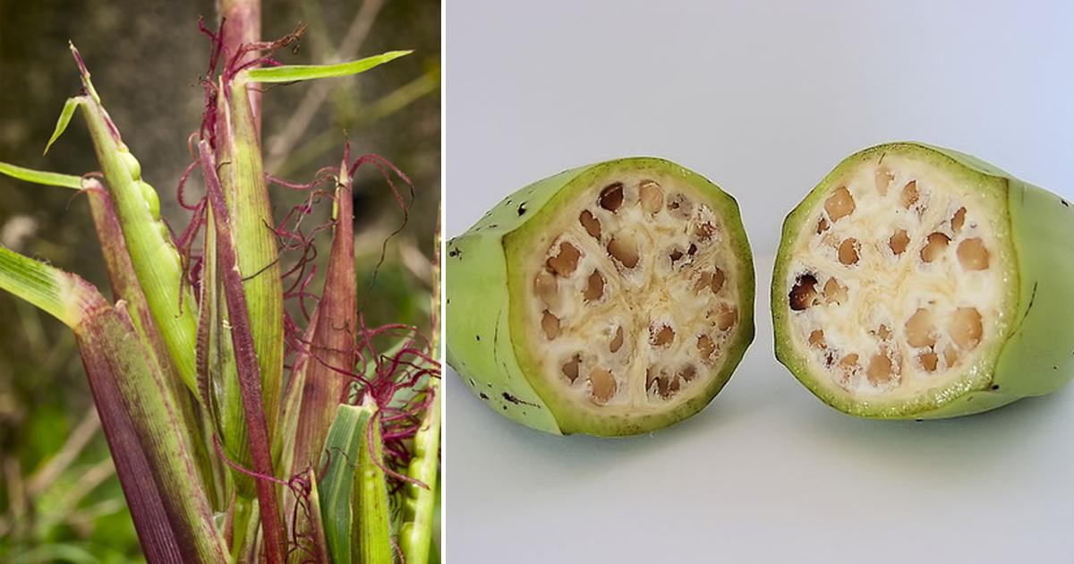 Фото Как изменились популярные фрукты за 7 тысяч лет
