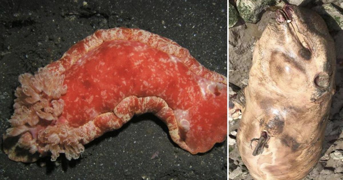 Фото Почти лох-несское чудовище: каких мутантов выбрасывает на берег