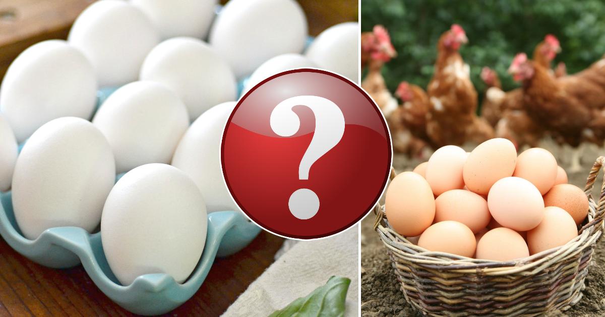 Правильный выбор: чем в действительности коричневые яйца отличаются от белых?