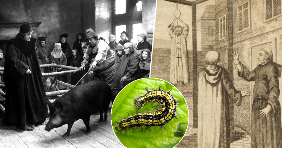 Лапки — не оправдание: как в средневековой Европе судили животных