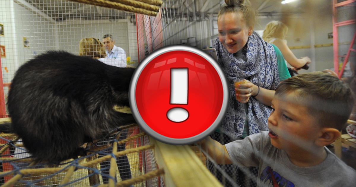 Чем ребенок может заразиться в контактном зоопарке