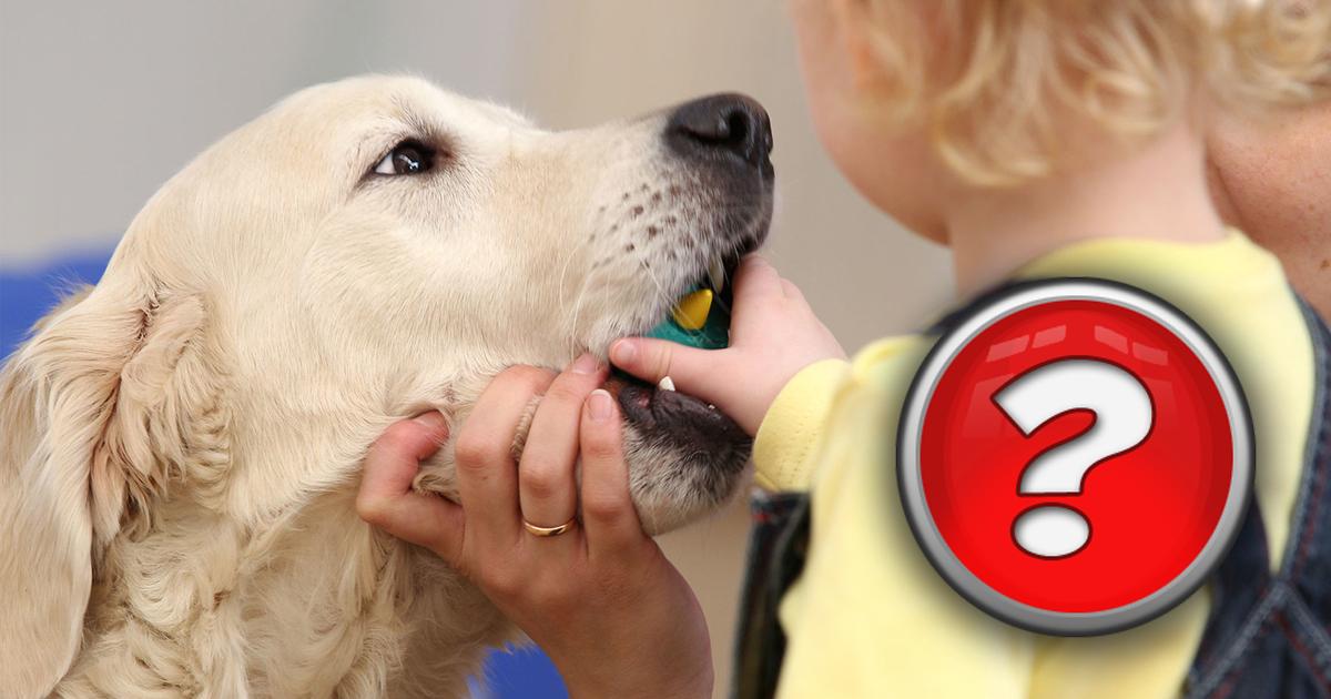 Фото Ошибки собаководов: Как не стать жертвой нападения своего пса?