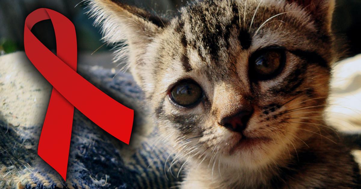 Кошачий аналог ВИЧ: чем опасны для нас домашние любимцы?