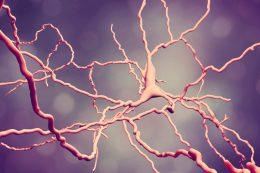 Препарат от астмы замедлит прогрессирование рассеянного склероза