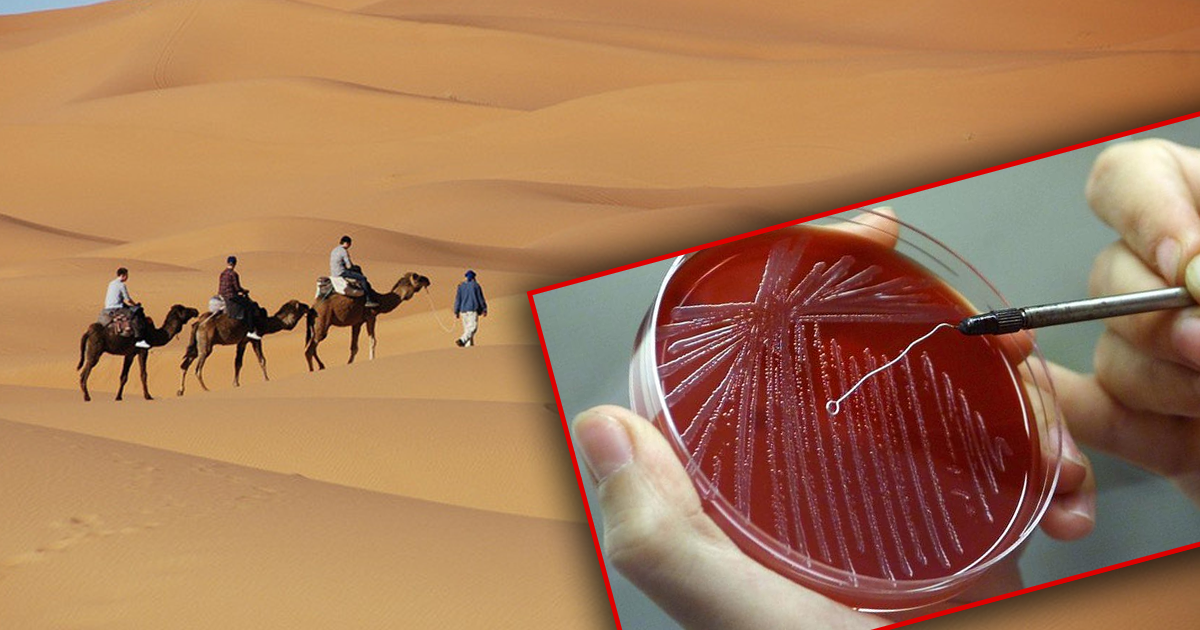 Подарки из отпуска: как туристы привозят на родину лихорадку, сибирскую язву и другие опасные болезни