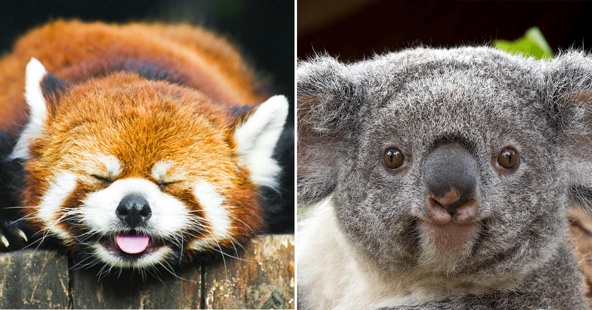 Внешность обманчива: милые на вид животные, которые могут быть очень опасны