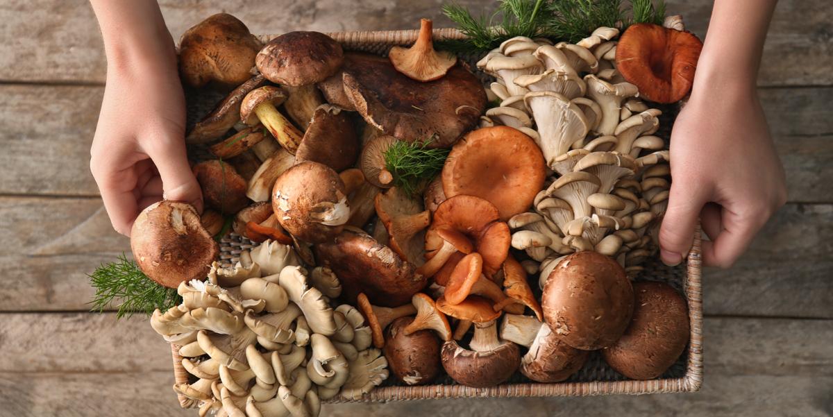 Фото Грибы - кладезь витаминов и минералов. Разберемся, как приготовить, чтобы они не потеряли, а приумножили их содержание.