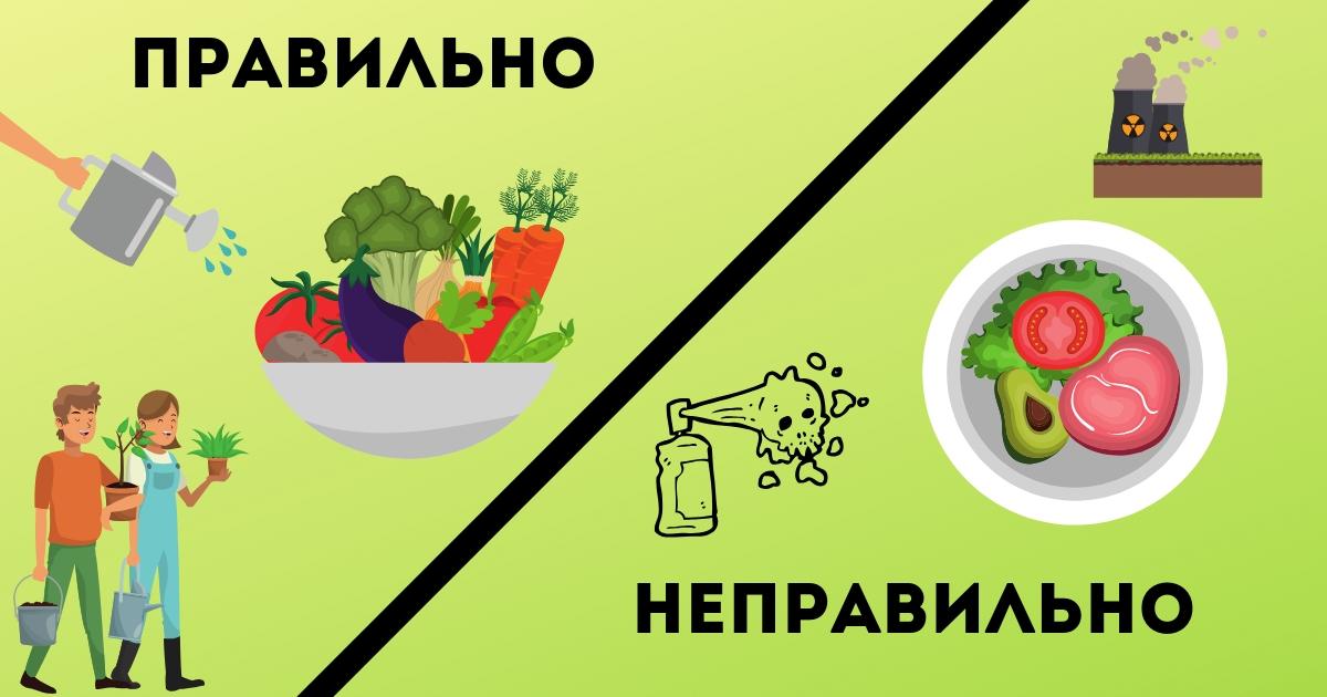 Фото Ученые: органическая пища поможет предотвратить рак