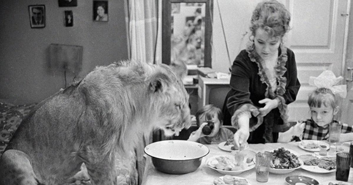 Фото Львёнок вместо котенка: почему европейцы заводят дома диких животных