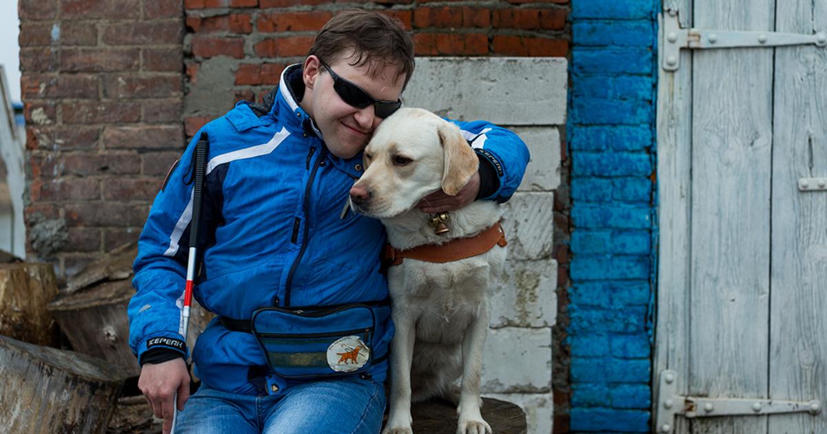 Фото Собаки-поводыри: знаю ли они, что их хозяин слеп