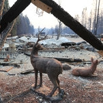 California Wildfires Updates: 42 Dead in Camp Fire, Toll Expected to Rise