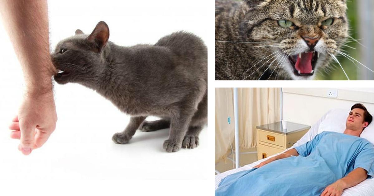 Фото Умер после отпуска: британец, укушенный котом, скончался от бешенства